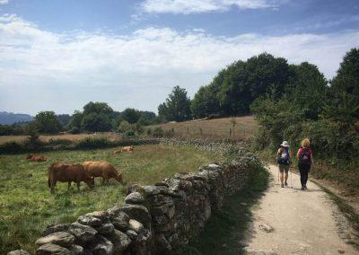 El Camino Spain